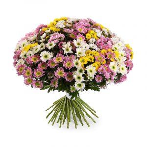 Din Crizanteme
